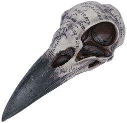 Edgarova havraní lebka